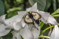 Vlinders 02