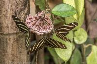 Vlinders 03