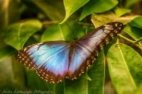 Vlinders 04